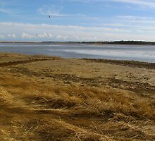 Salt Pond and grass by GleaPhotography