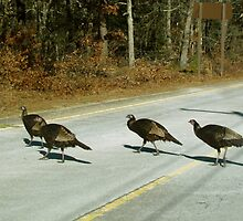 Turkeys crossing the Road by GleaPhotography