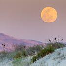 Desert Moon by Linda Sparks