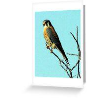 American Kestral Portrait Greeting Card