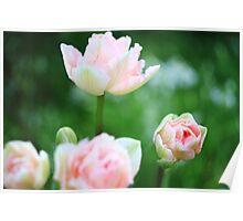 Bokeh Tulips Poster