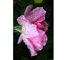 Rose to Victory - - over Breast Cancer Photographic Print