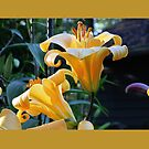 Twin Golden Lilies! by Pat Yager