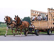 Amish Wagon Belgian Horses Photographic Print