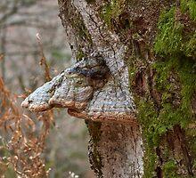 Woodland creatures by Mark Bangert
