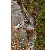 Woodland creatures Photographic Print