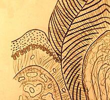 dens premolaris by DrNagel