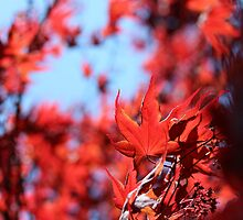 Bright Summer Acer by KayEeGee