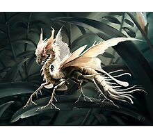 Insect dragon Photographic Print