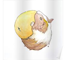 Guinea Pig & Orange Poster