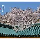 TsuHanami, a wave of Spring by 73553