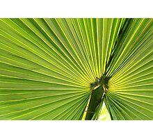 Palm Tree Leaf Photographic Print
