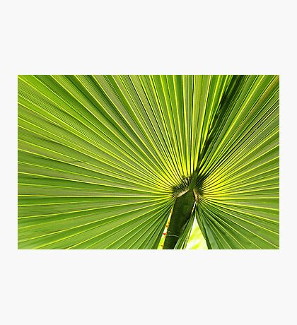 Palm Tree Leaf Photographic Print