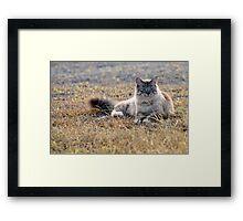 Chino cat! Framed Print