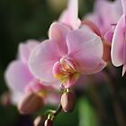Orchid  at the LA Flower Market by Trevor B