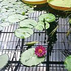 Water lilly by Vanella Mead