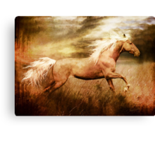 Fleet Palamino Horse Canvas Print