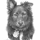 Black hairy dog drawing by Mike Theuer