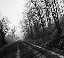 Foggy River Road by Lynn Gedeon