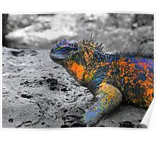 Marine Iguana In The Galapagos Sunning Itself Poster