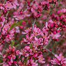 Prunus Tree by DIANE  FIFIELD