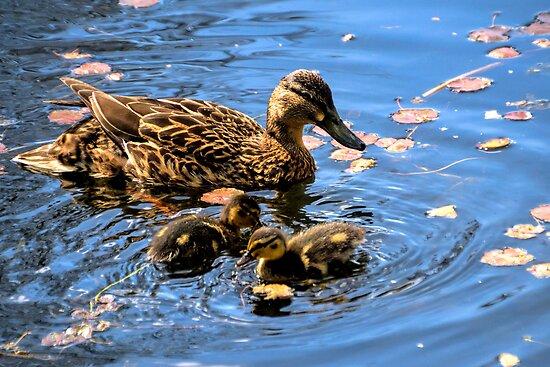 Mum and Baby Ducks......... by lynn carter