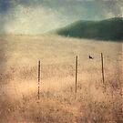 Bird On A Wire by Honey Malek