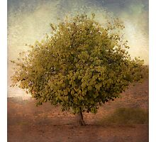 Whimsical Tree Photographic Print