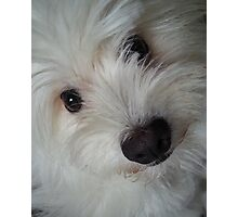 Emotional Support Dog (Portrait) Photographic Print
