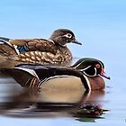 Wood Duck Couple by KatMagic Photography