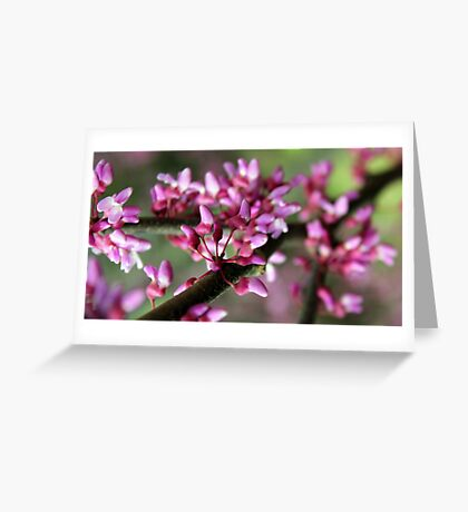 Redbud Blossoms Greeting Card