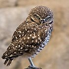 Burrowing Owl by TeresaB