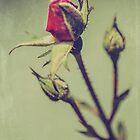 Blushing Bud by Honey Malek