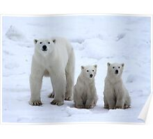 Family Portrait #1 - Polar Bears, Churchill, Canada Poster