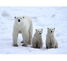 Family Portrait #1 - Polar Bears, Churchill, Canada Photographic Print