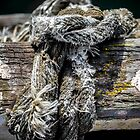 A frayed knot by Adam Le Good
