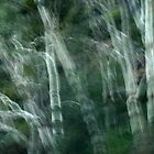 Ghost Gums by Ben Loveday