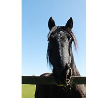Black Beauty Photographic Print