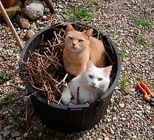 Two Cats in Garden Tub by jojobob