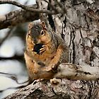The Cutest Squirrel of the Day! by Keala