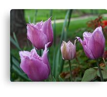 Fringed Tulips Canvas Print
