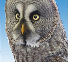 Owl by looneyatoms