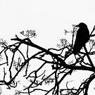 Crow by Jasna