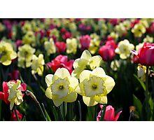 ~Happy Spring~ Photographic Print