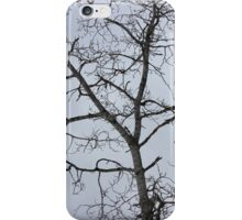 Birch Trees iPhone Case/Skin