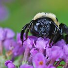 bee in purple by ANNABEL   S. ALENTON