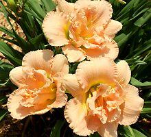 Apricot Lily Trio by AuntDot