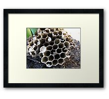 A beehive of information Framed Print