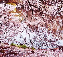 Blossoming cherry tree branches touching water art photo print by ArtNudePhotos