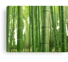 Bamboo forest background art photo print Canvas Print